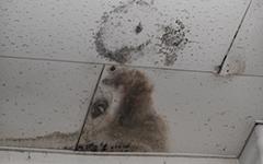 天井や壁のシミ